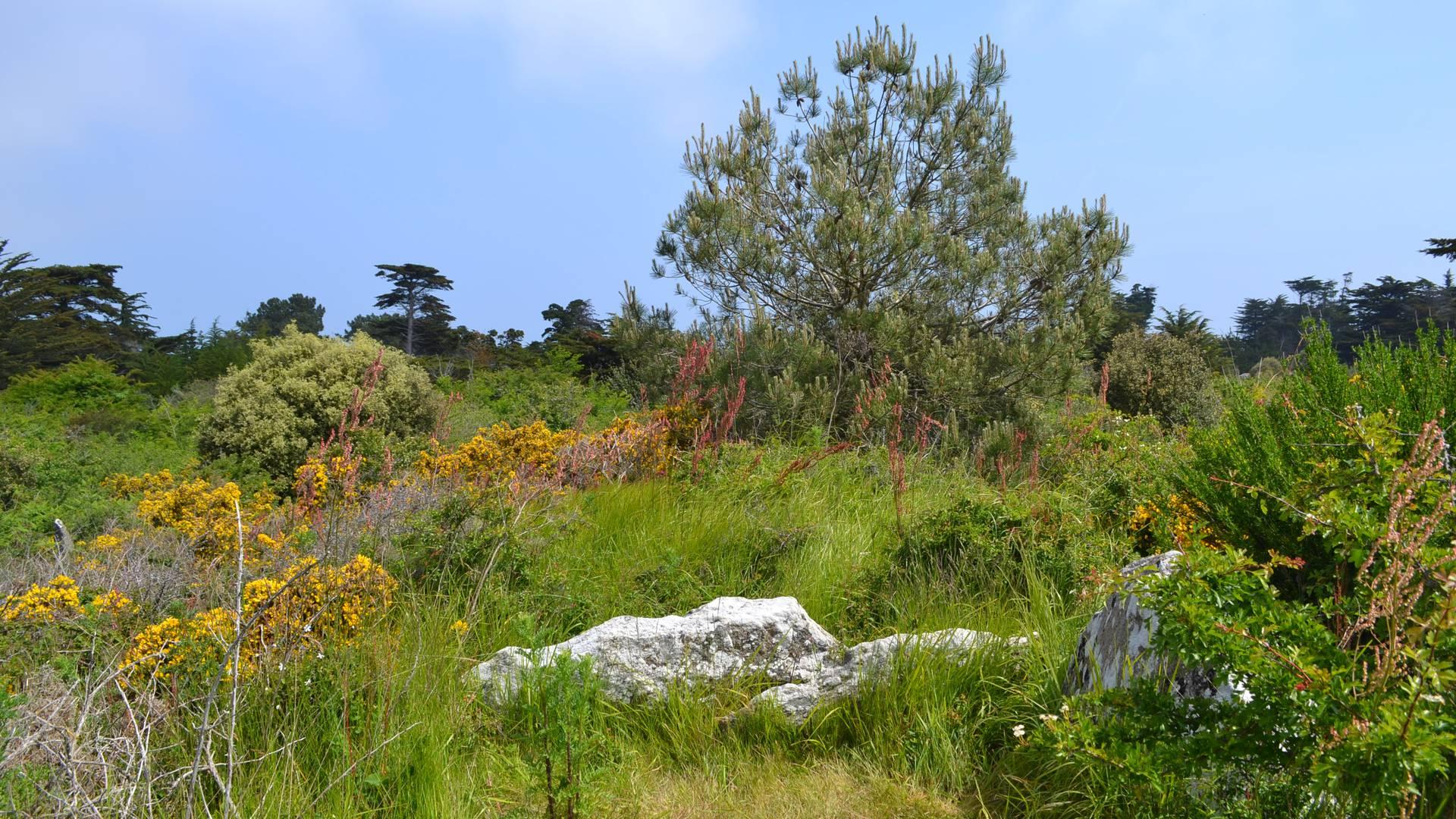 Trémureau des Landes, megalith, Ile d'Yeu