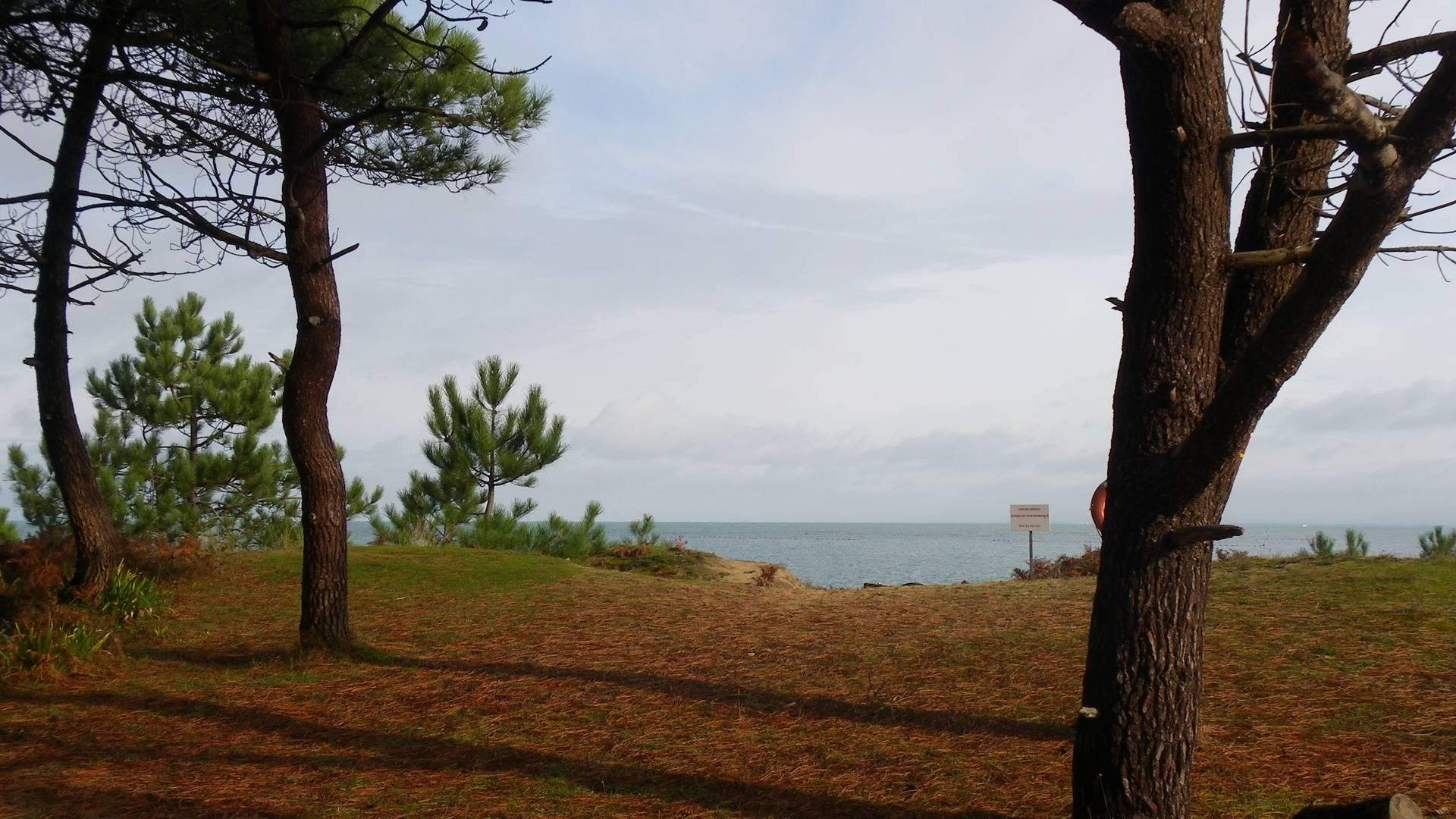 Woods - Ile d'Yeu